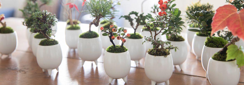 マイクロ盆栽