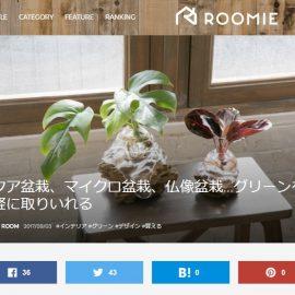 ROOMIE(9/3付)にアクア盆栽、仏像盆栽、マイクロ盆栽が紹介されました!