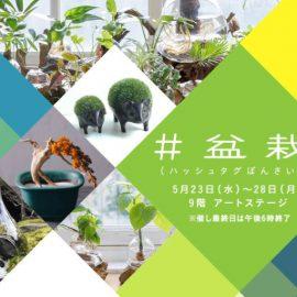 5月23日(水)~28日(月)阪急うめだ本店でアクア盆栽を販売します!