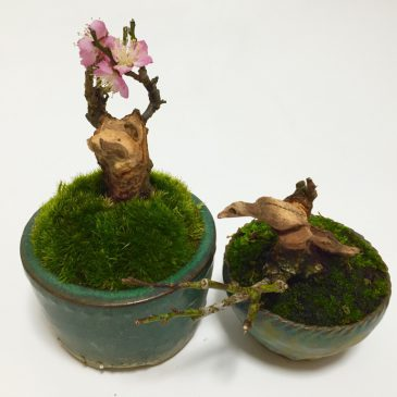 ちょっと変わった盆栽シリーズ