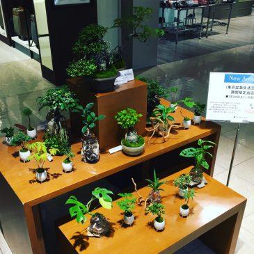 東急百貨店 渋谷本店にて展示販売(7/29~30)