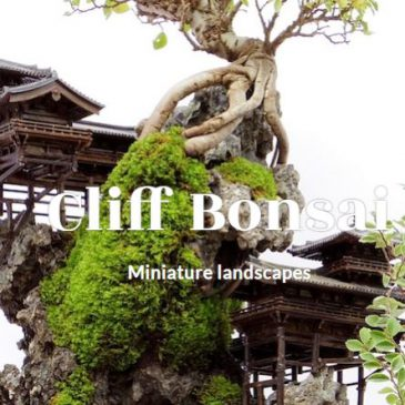 海外の人気盆栽サイト「BONSAI EMPIRE」で紹介されました!