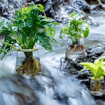 水耕栽培植物ブランド「WOOTANG」がオープン!